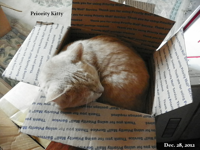 priority_kitty