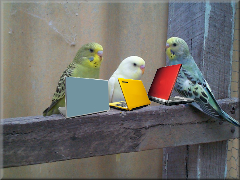 blogging_budgies_2