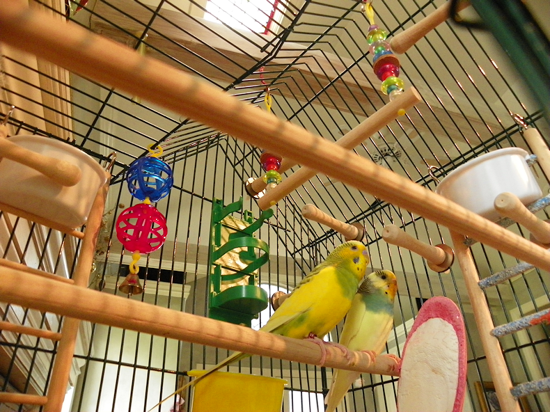 parakeet_cage_today