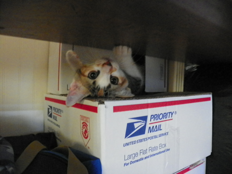 box_kitteh_2