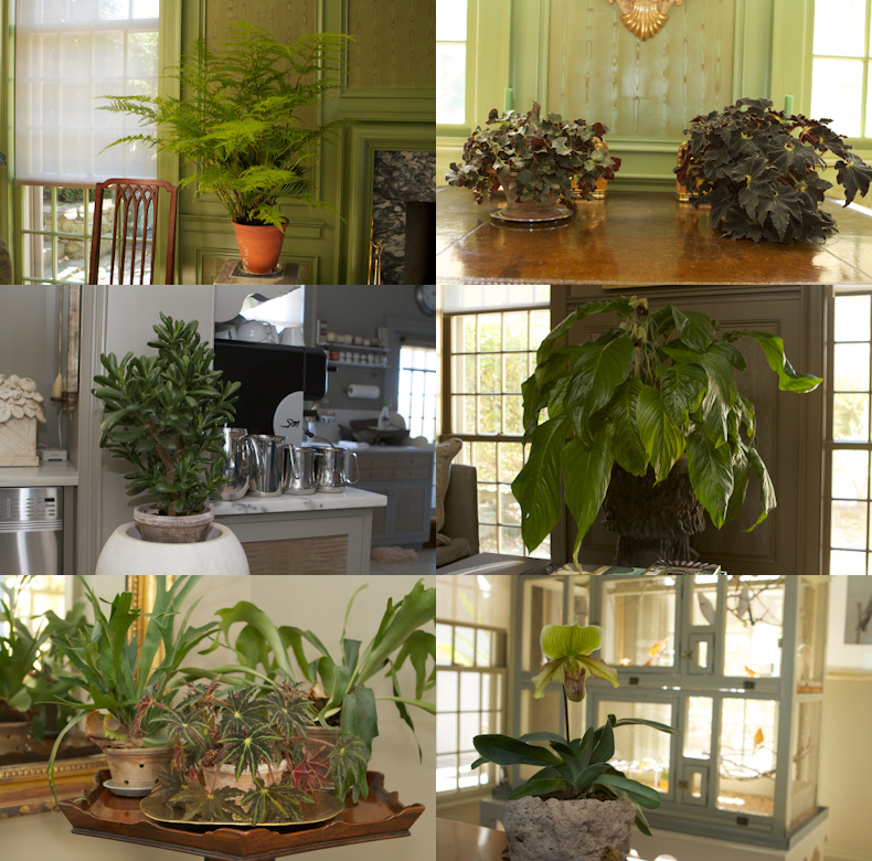 marthas_beautiful_houseplants