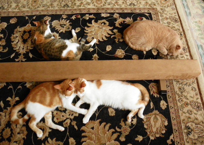4_cats_and_a balance_beam