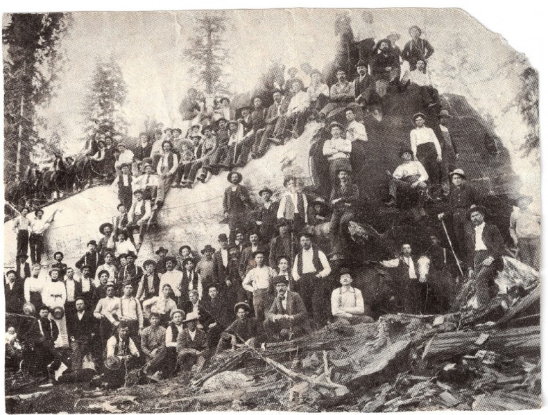 quite_a_few_lumberjacks