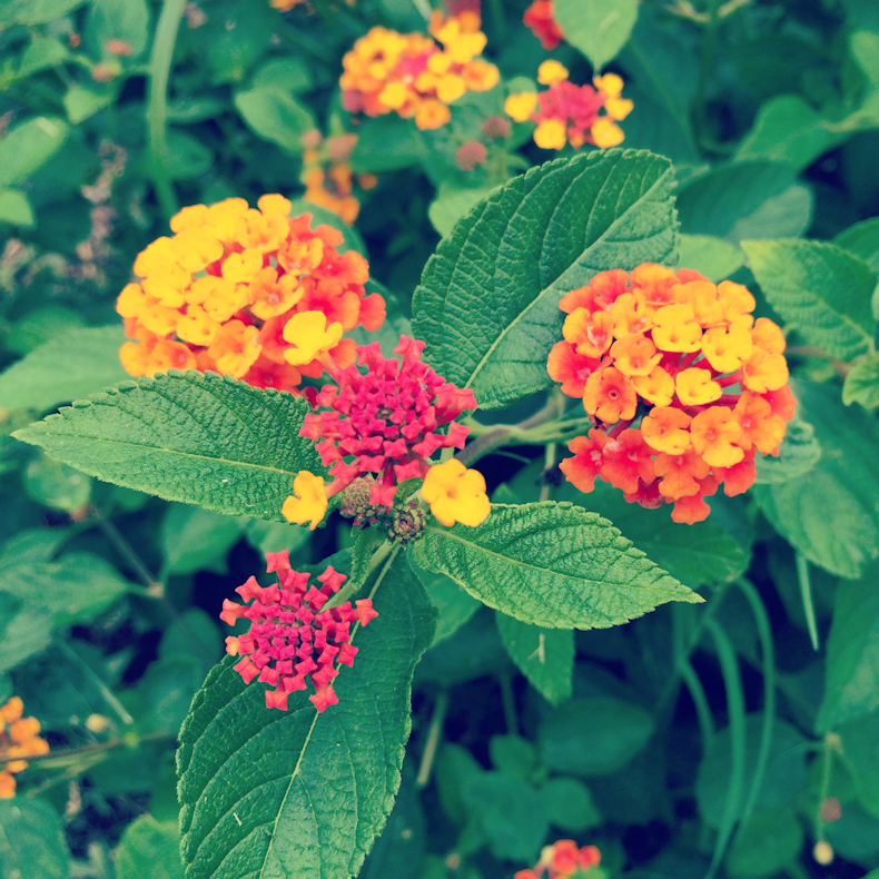 neighborhood_lantana